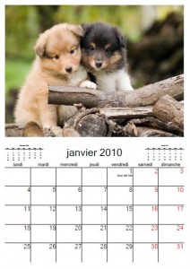 calendrier chien 2010